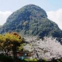 岩剣城跡と桜