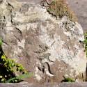 梵字刻銘の石片